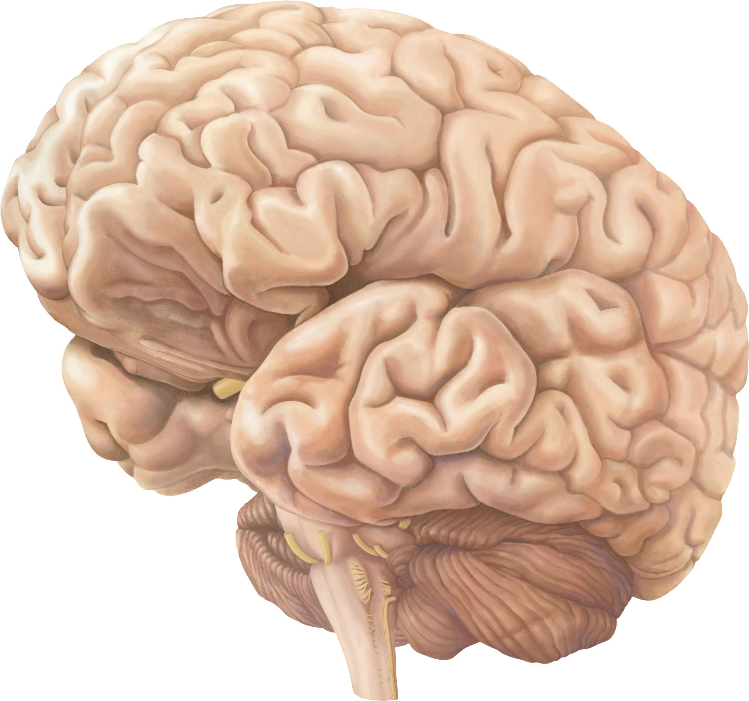 brein-geheel-2560