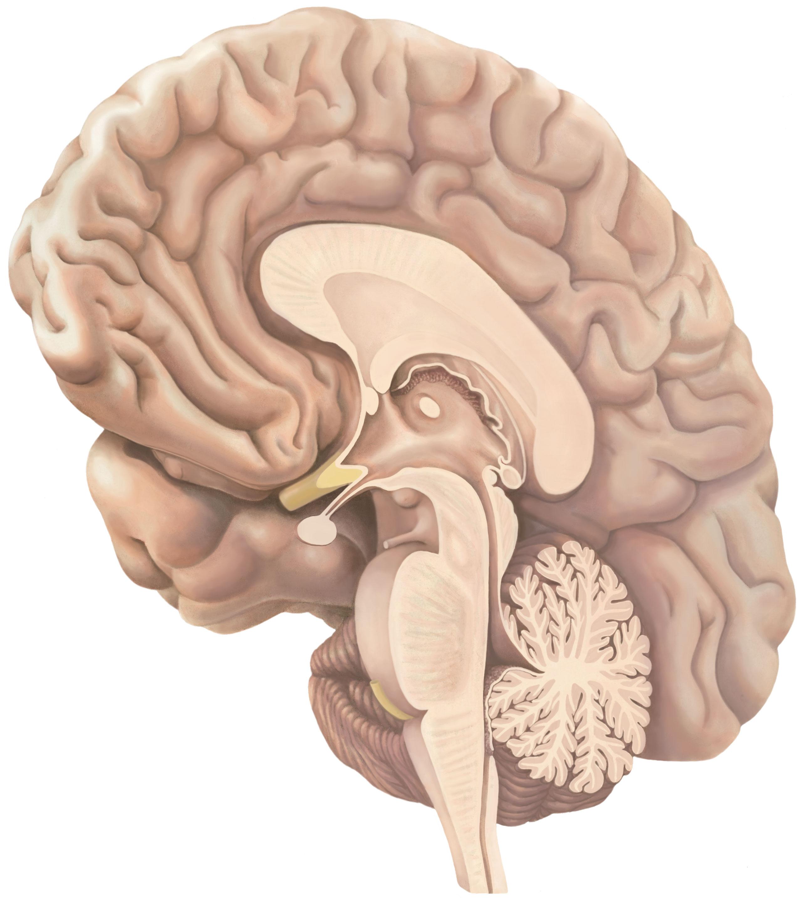 brein-mediaal-2560