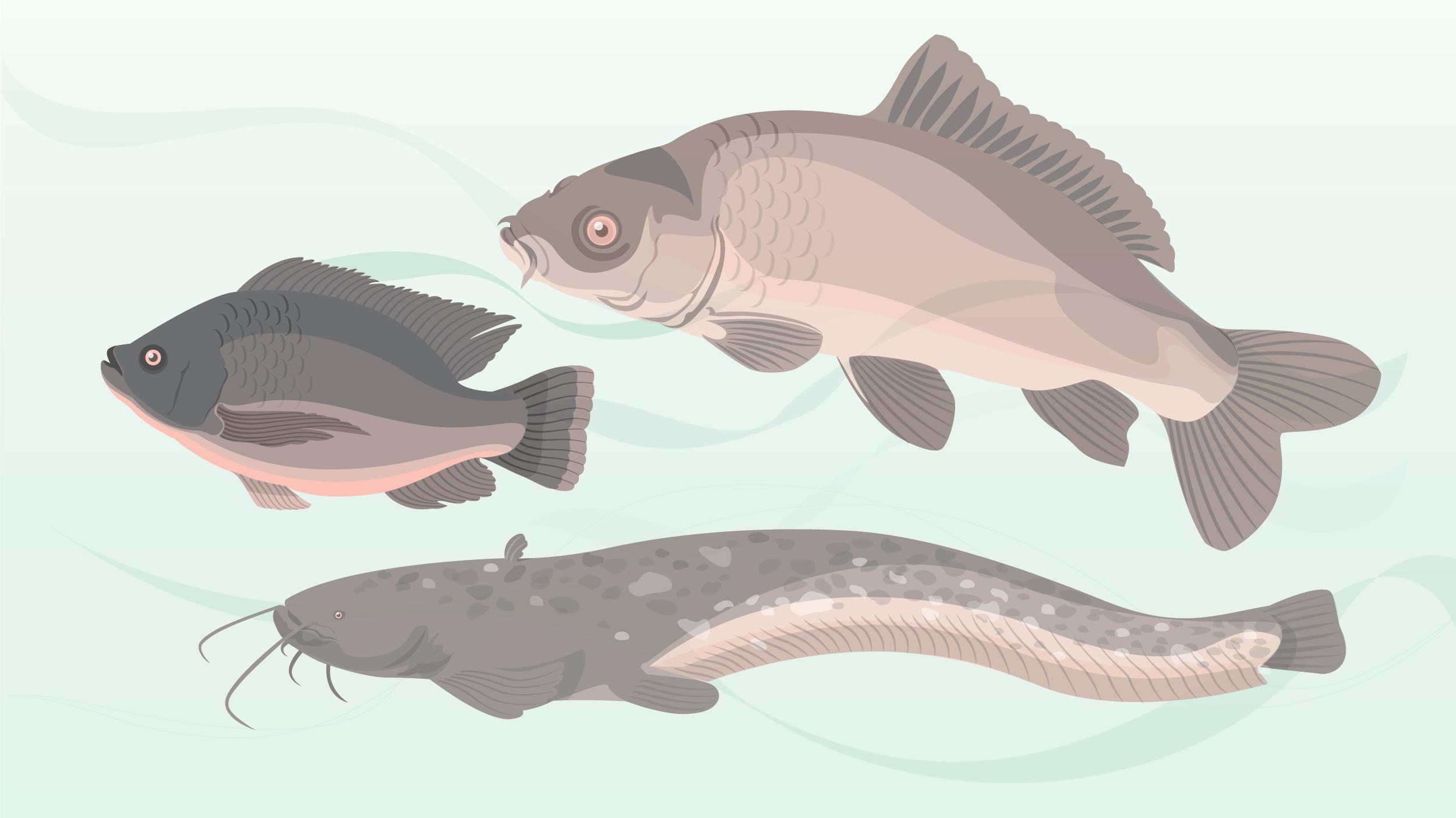Vissen-kleur