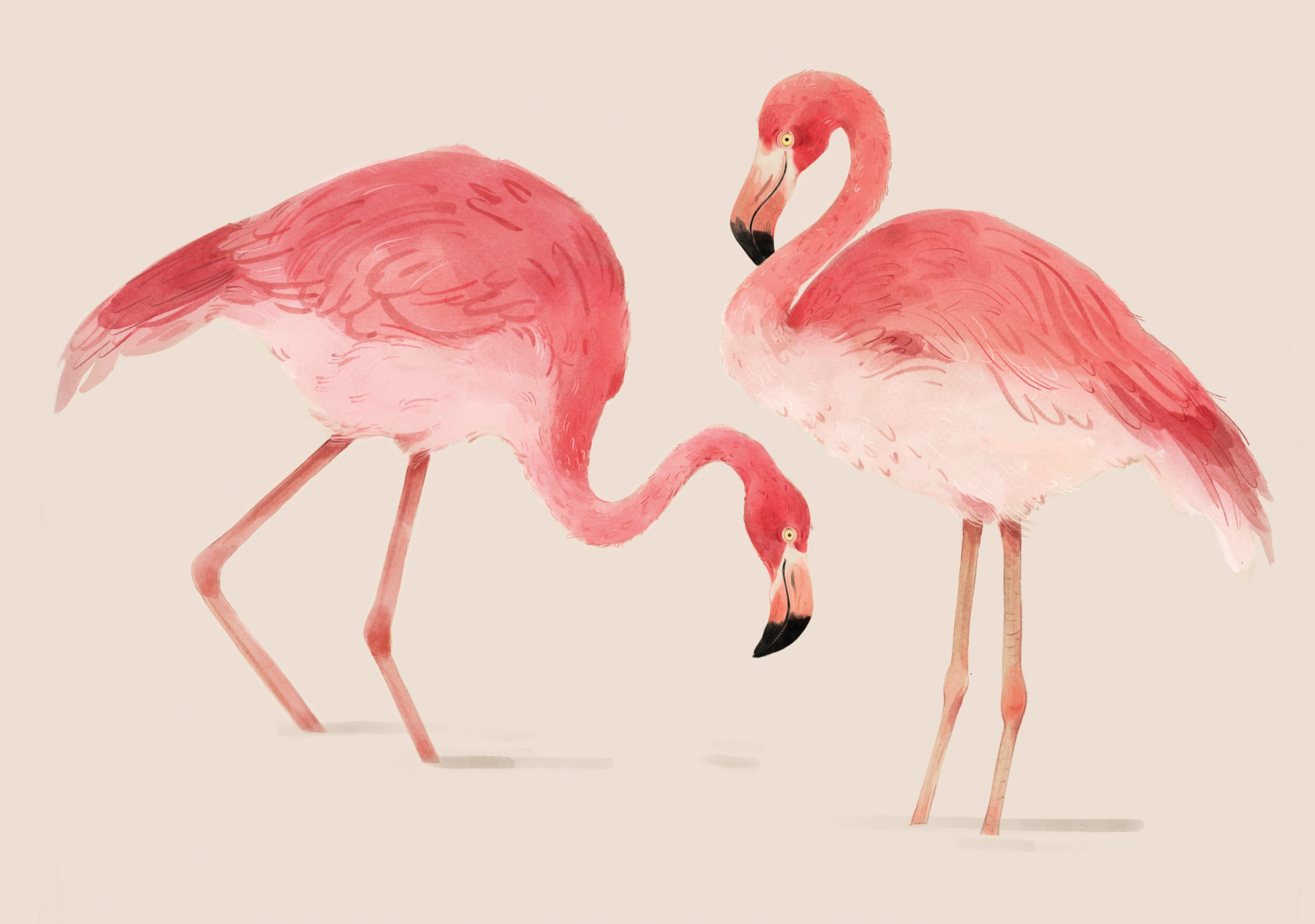 14_Portret_Rode_Flamingo