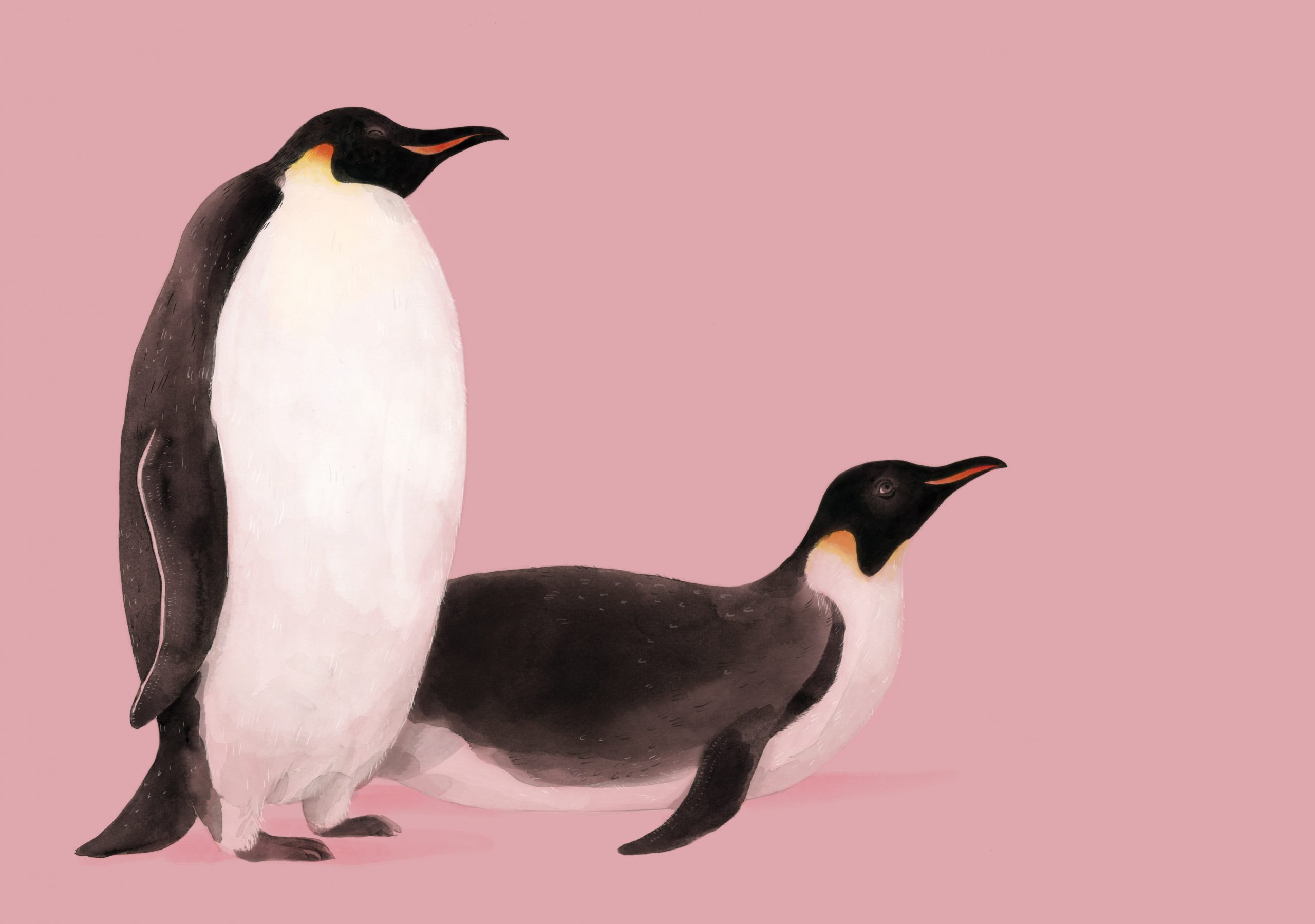 1_Portret_Pinguins