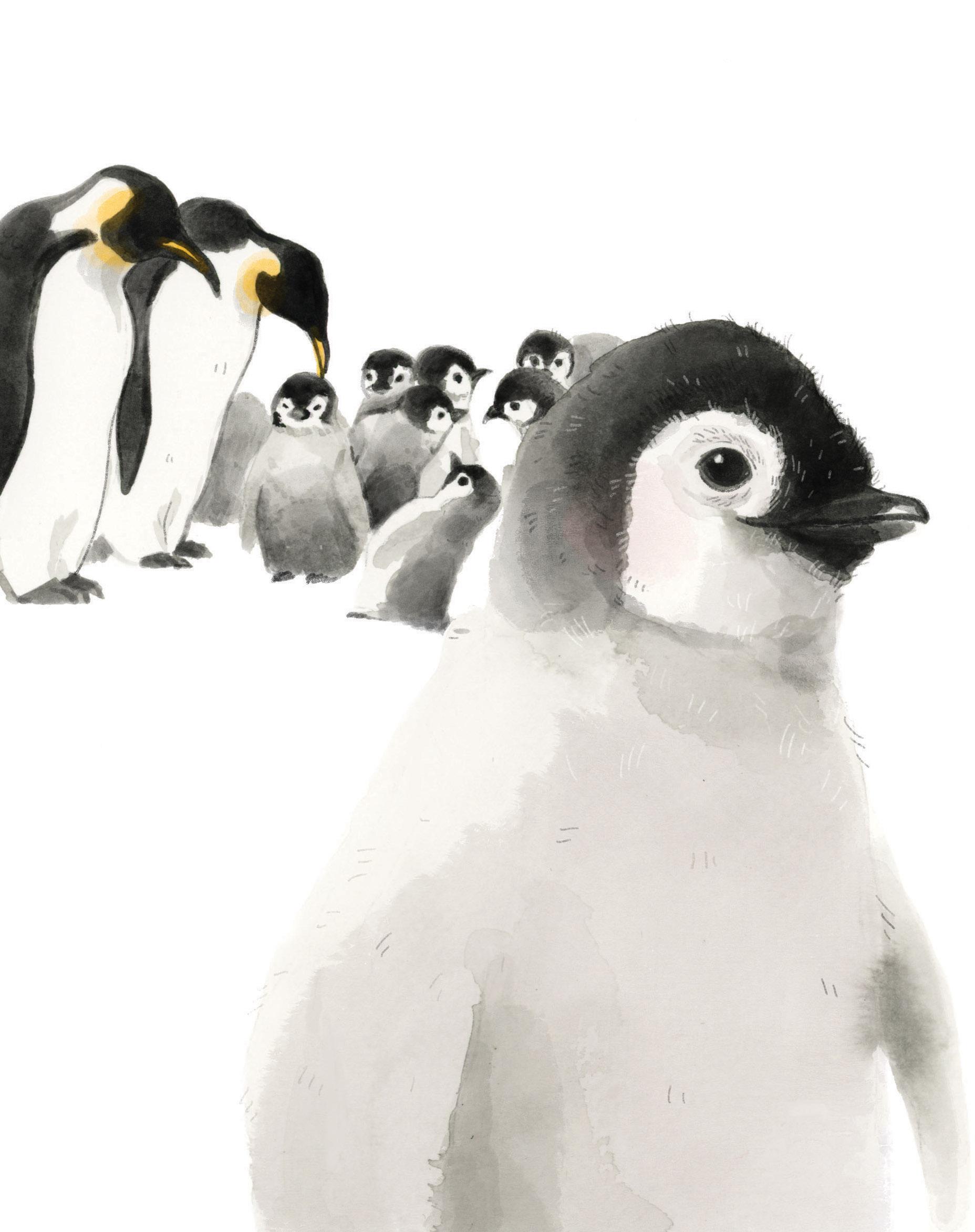 3_Pinguin_Habitat copy