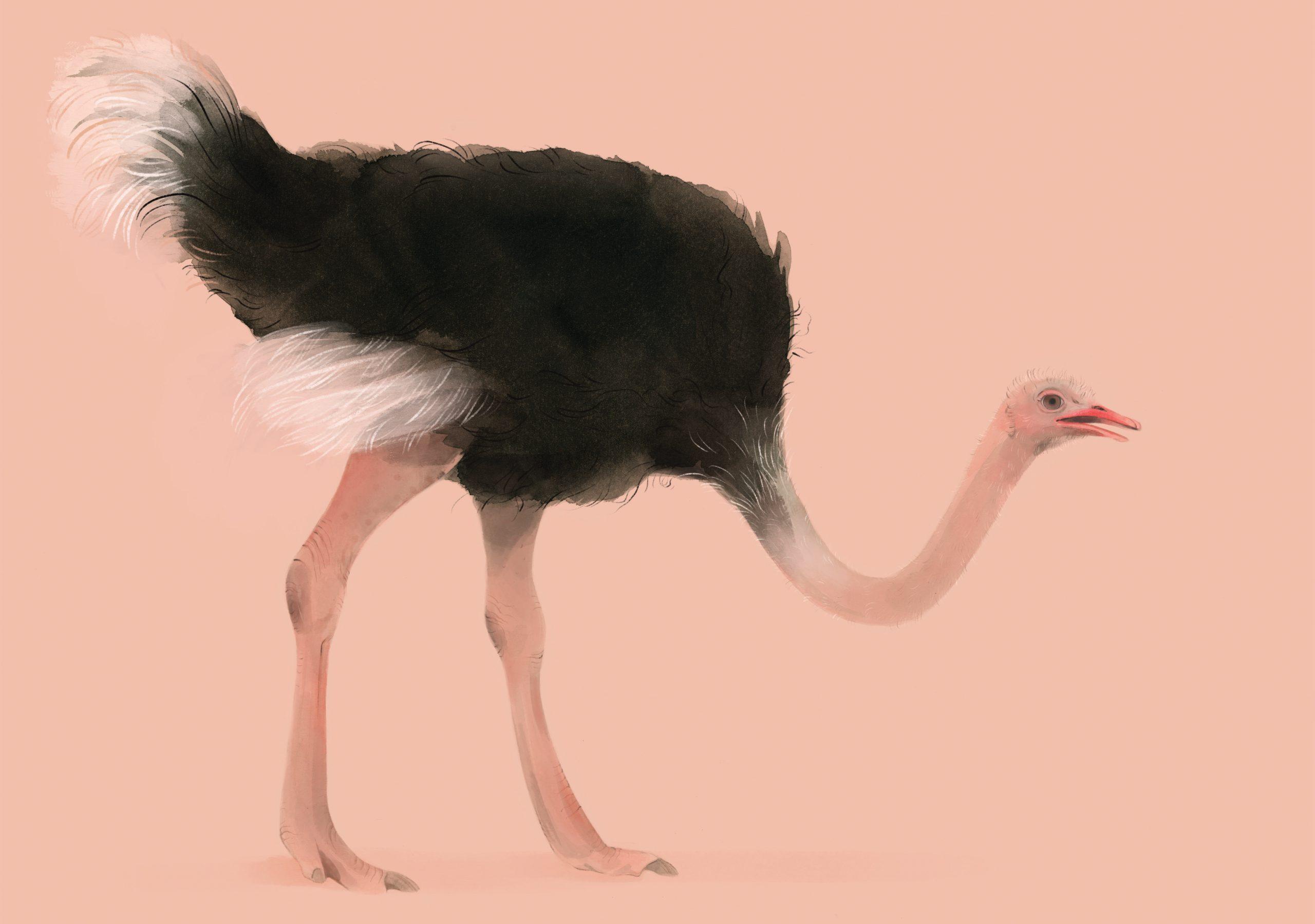 19.StruisvogelPortet